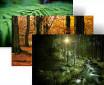 Win7森林主题