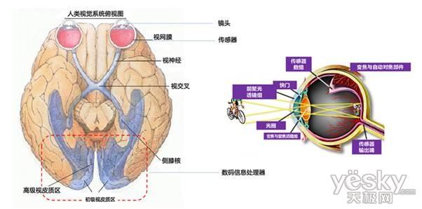 数码相机与人眼结构对比图)-明基旋转屏大光圈相机G1 自主研发创