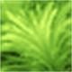 梦幻水族馆(Dream Aquarium)绿色版标题图