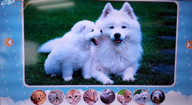宠物相册截图3