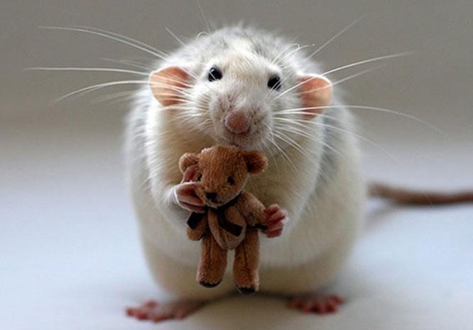 闲得蛋疼无聊人士专用游戏:《进击的老鼠》
