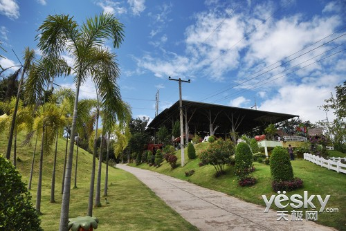 热带风情 尽享自由 尼康D750泰国清迈行