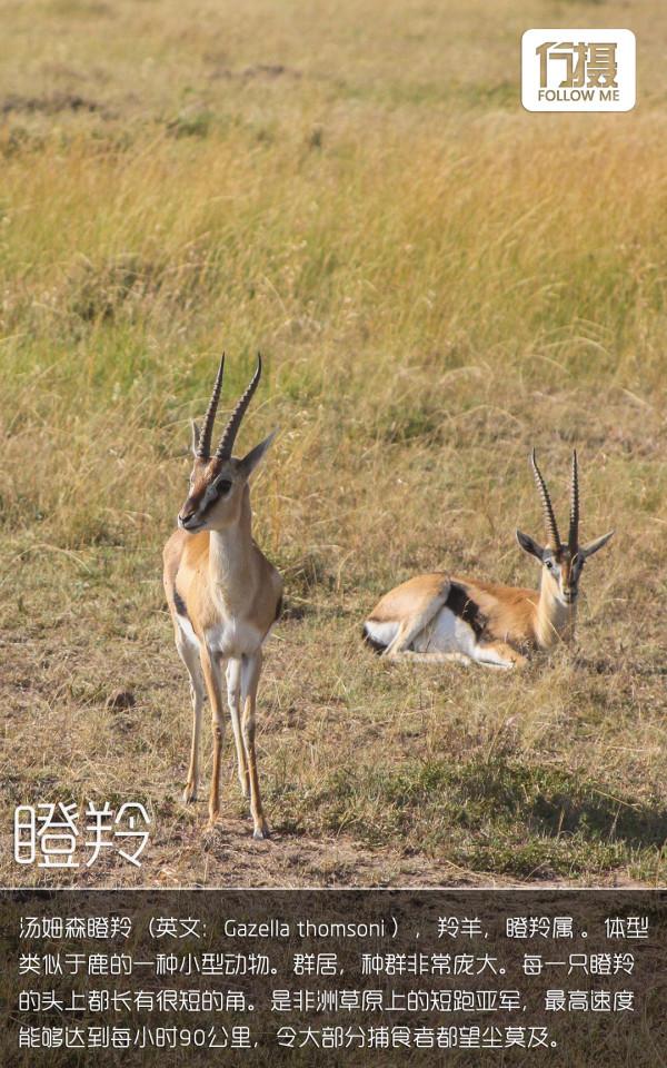 行摄Vol.22 狂野・肯尼亚 原生态动物王国