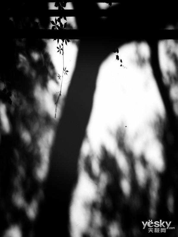 不亚于专业相机 看平板镜头与秋日的邂逅!