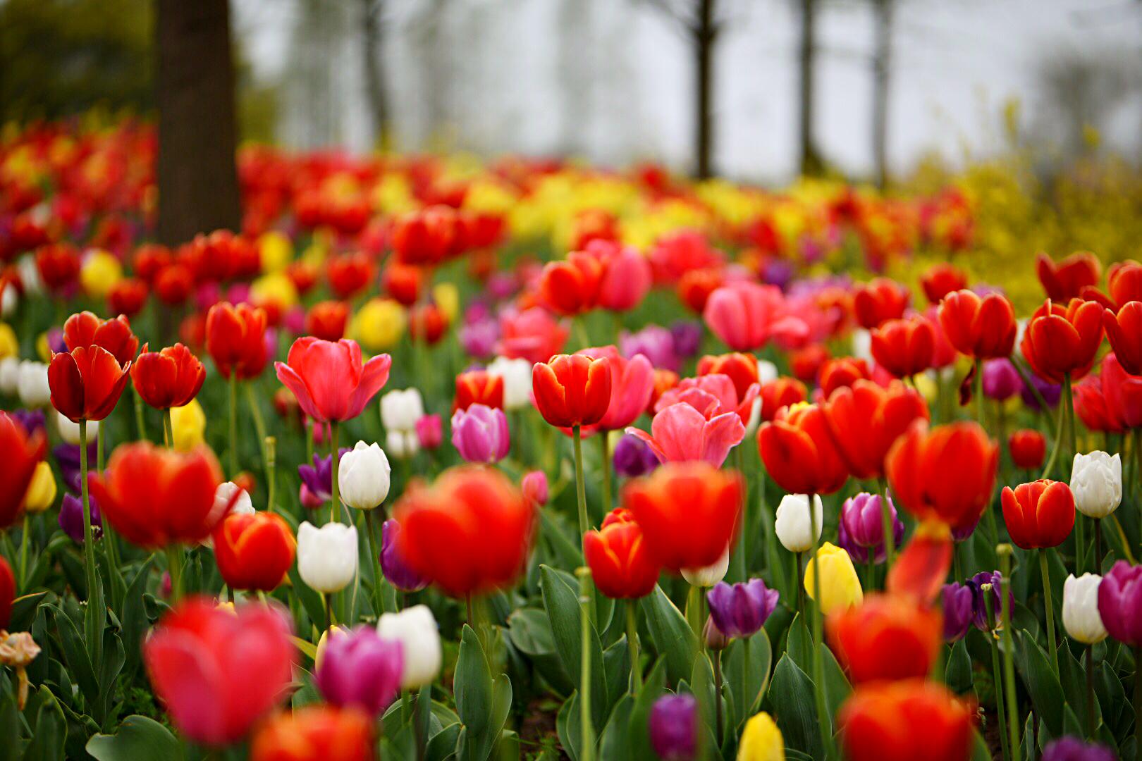春天赞美的诗句