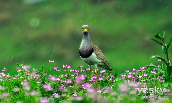 冒雨带索尼微单A6500下鄱阳湖拍鸟
