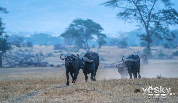 索尼全画幅微单™旗舰A9邂逅狂野非洲