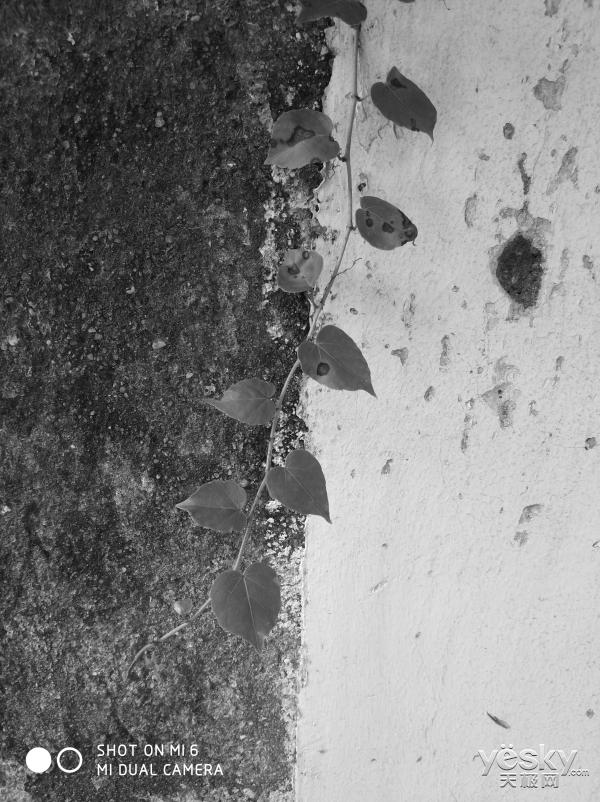 荣耀9小米6与魅族PRO7三款旗舰的拍照体验