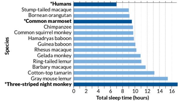 研究显示人类睡眠时间还不如黑猩猩长 老板我想请假补个觉!
