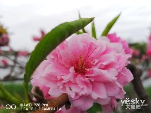 """""""神机妙拍"""":用vivo X21屏幕指纹版拍摄阴雨天的颐和园"""