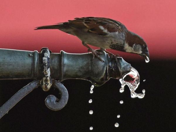 想喝到长白雪山泉水? 净水设备或许能帮上你